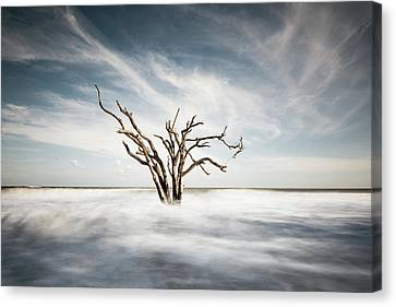 Movement Canvas Print by Ivo Kerssemakers