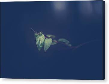 Canvas Print featuring the photograph Moving In The Shadows by Shane Holsclaw