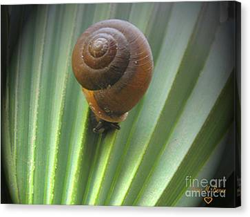 Canvas Print featuring the photograph Moving Slow by Donna Brown