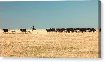 Moving The Herd Canvas Print by Todd Klassy