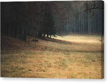 Mprints - Cade's Cove Canvas Print
