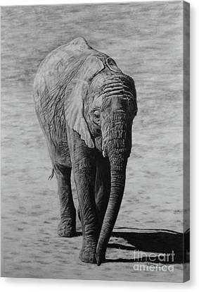 Mpumi Canvas Print by Jennifer Watson
