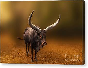 Mr. Bull From Africa Canvas Print by Charuhas Images