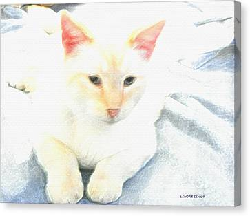 Flame Point Siamese Canvas Print - Mr. Cat by Lenore Senior