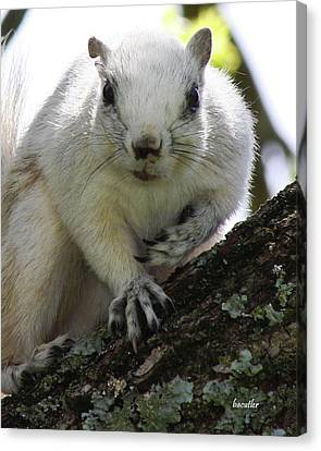 Fox Squirrel Canvas Print - Mr. Inquisitive I  by Betsy Knapp