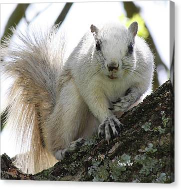Critter Canvas Print - Mr. Inquisitive II by Betsy Knapp