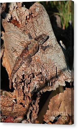 Canvas Print featuring the photograph Mr. Lizard - Tucson Arizona by Donna Greene
