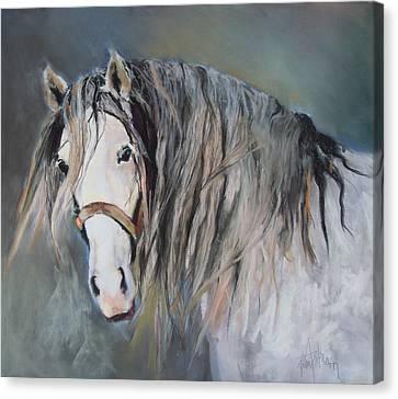 Mr Magnificent Canvas Print by Debbie Anderson