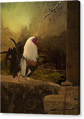 Mr Rooster Canvas Print by Jeff Burgess