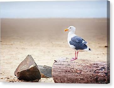 Mr. Seagull Canvas Print