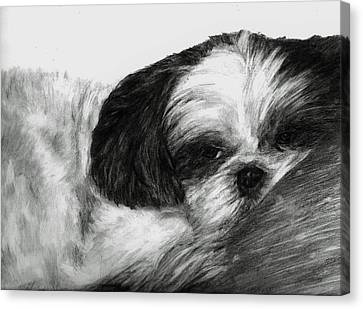 Canvas Print featuring the drawing Mr Tibbs by Meagan  Visser