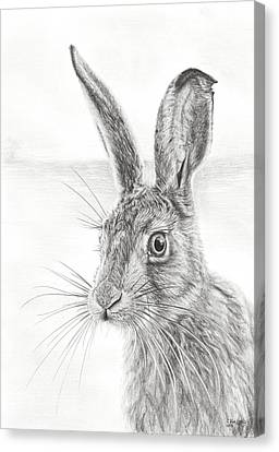 Mr Whisker Canvas Print by Frances Vincent