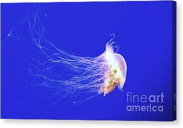 Canvas Print featuring the photograph Mr.jelly by Vanessa Palomino