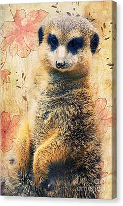 Mrs Suricate Canvas Print by Angela Doelling AD DESIGN Photo and PhotoArt