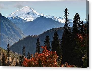 Aster Canvas Print - Mt Baker From The Yellow Aster Trail by Alvin Kroon