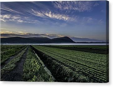 Dawn And Fog Over The Farmland Canvas Print