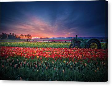 Canvas Print featuring the photograph Mt. Hood And Tulip Field At Dawn by William Lee