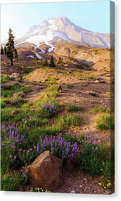 Mt. Hood In Springtime Canvas Print by Athena Mckinzie