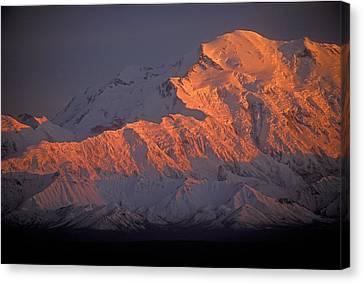 Mt. Mckinley Sunset Canvas Print by Sandra Bronstein