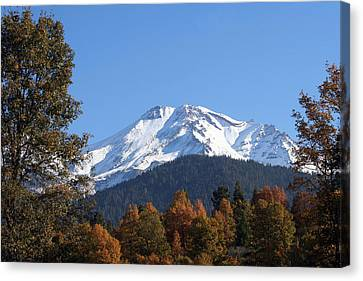 Canvas Print featuring the photograph Mt. Shasta Framed by Holly Ethan