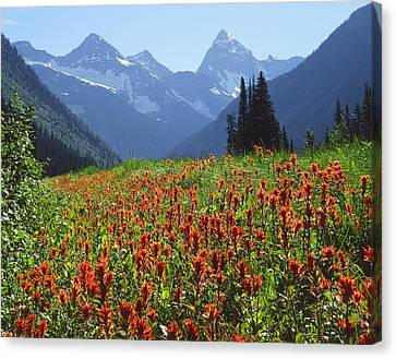 1m2609-h-mt. Sir Donald And Paintbrush  Canvas Print by Ed  Cooper Photography