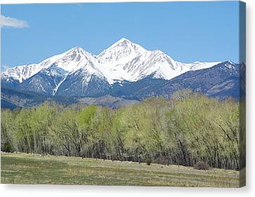 Mt. Yale - Spring Canvas Print by Aaron Spong
