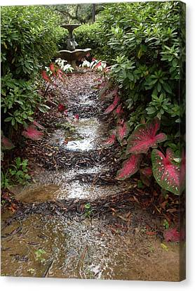 Muddy Fountain Path Canvas Print by Warren Thompson