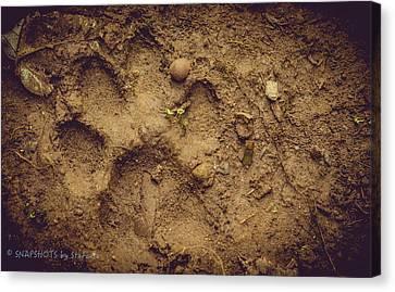 Muddy Pup Canvas Print