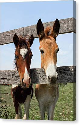 Mule And His Painted Friend Canvas Print by Barbara McMahon