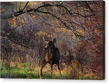 Mule Deer Digital Art Canvas Print