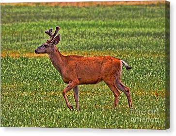 Mule Deer On The Sante Fe Trail Canvas Print by Tommy Anderson