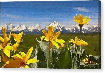 Mules Ear Flowers And Grand Tetons Canvas Print