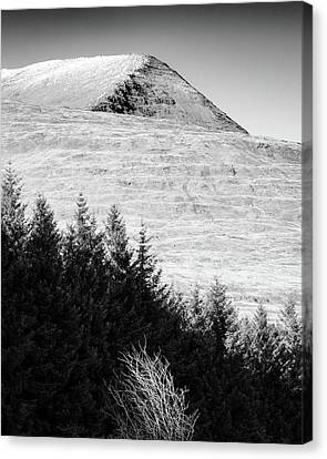 Mull Trees And Peak Canvas Print by Dave Bowman