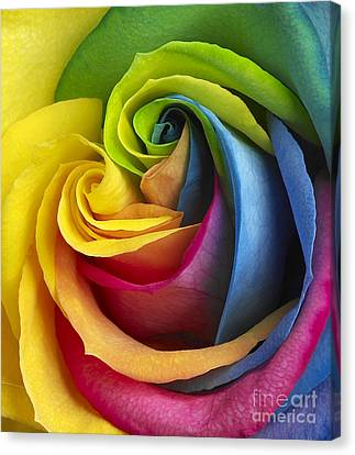 Rainbow Rose Canvas Print by Tony Cordoza