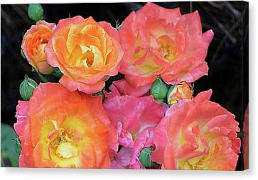 Multi-color Roses Canvas Print