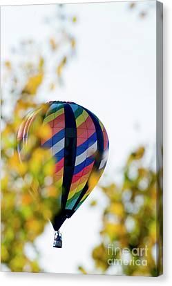 Multi Colored Hot Air Balloon Through The Trees Canvas Print by Dan Friend