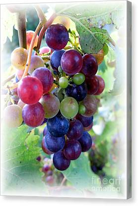 Multicolor Grapes Canvas Print by Carol Sweetwood