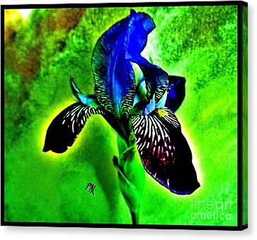 Multicolor Iris Canvas Print by Marsha Heiken