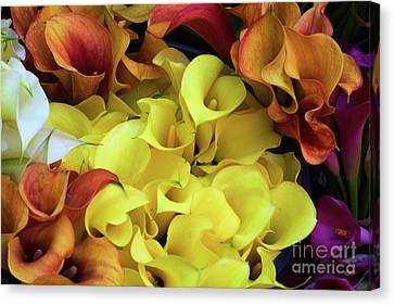 Multicolored Calla Lillies Canvas Print