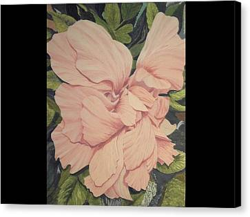 Multipetaled Pink Hibiscus Canvas Print by Hilda and Jose Garrancho