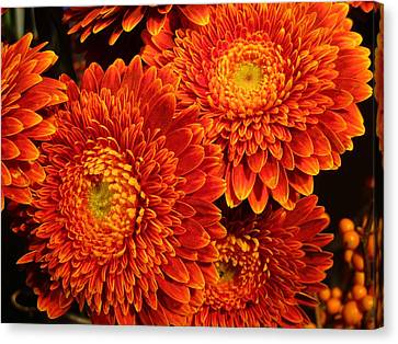 Mums In Flames Canvas Print by Rosita Larsson