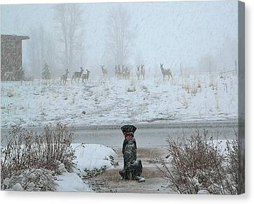 Murphy Watches The Deer Canvas Print by Eric Tressler