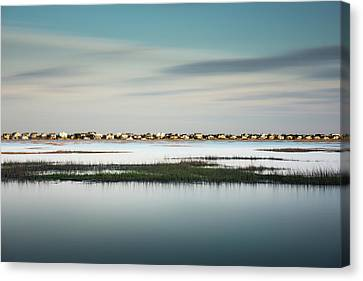 Murrells Inlet Marsh Canvas Print
