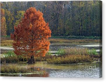 Canvas Print featuring the photograph Muscatatuck - D009967 by Daniel Dempster