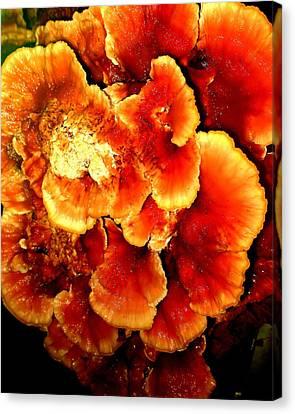 Mushroom Canvas Print by Aron Chervin