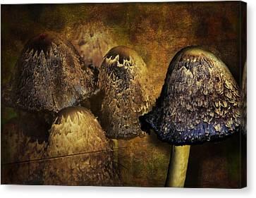 Shrooms Canvas Print - Mushroom City by Gary Smith
