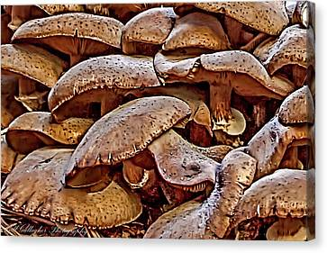 Mushroom Colony Canvas Print by Bill Gallagher