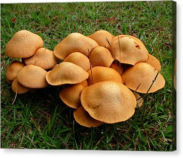 Canvas Print featuring the photograph Mushroom Gathering by Jeanne Kay Juhos