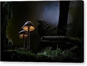 Mushroom Light Canvas Print by Dirk Ercken