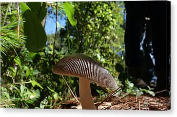 Canvas Print featuring the photograph Mushroom by Matthew Bamberg